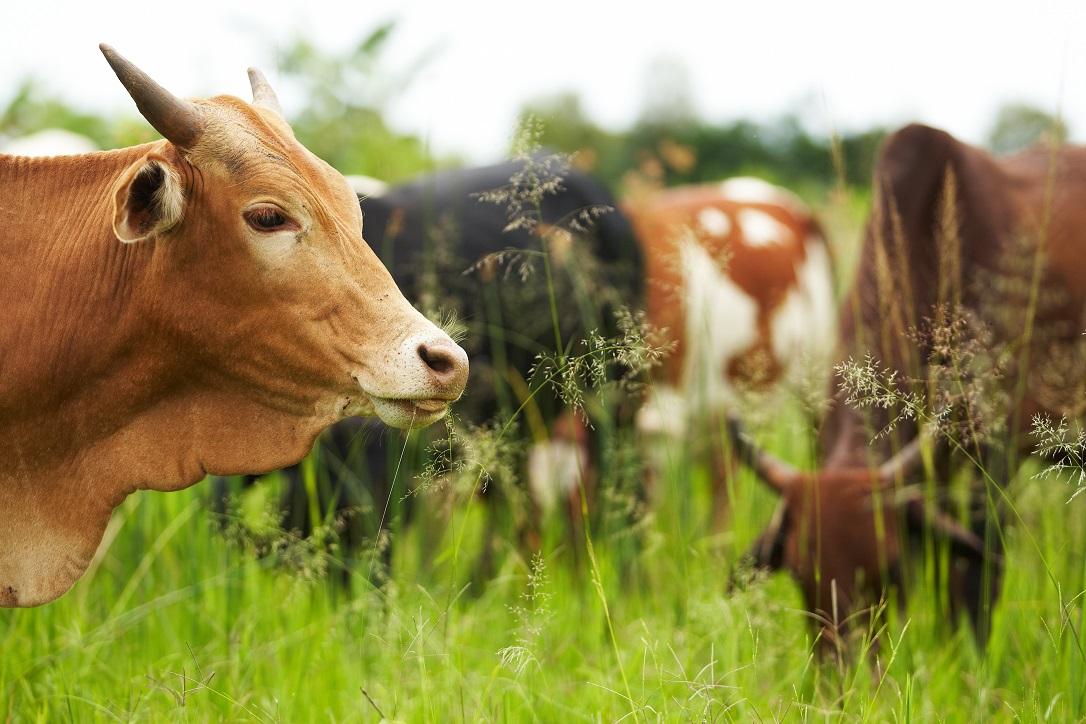 Сельскохозяйственная сфера